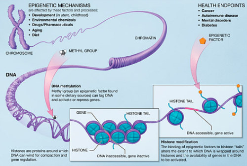 epigenetic mechanisms diagram