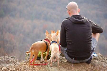 man with dogs, happiness secrets