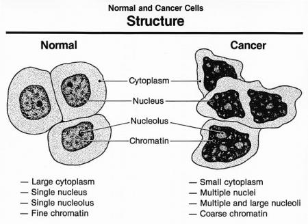 normal cells and cancer cells