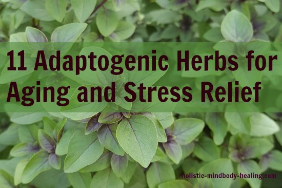 herbal adaptogens for aging and stress relief